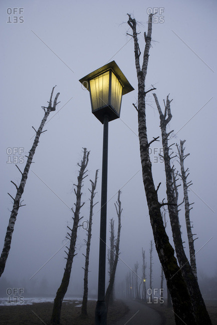 Austria, Salzkammergut, Mondsee, Bare trees and lighted street lamp