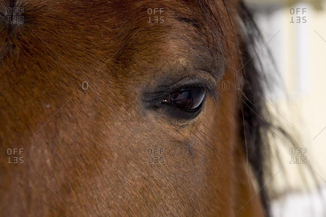 Closeup of a horse's eye.