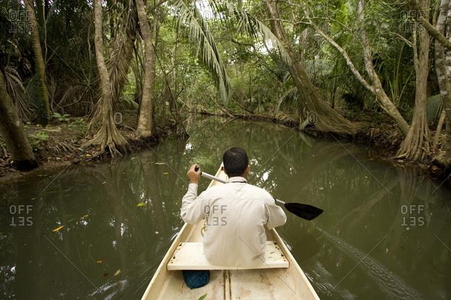 A man paddles through mangrove swamp forest along Boom Creek.