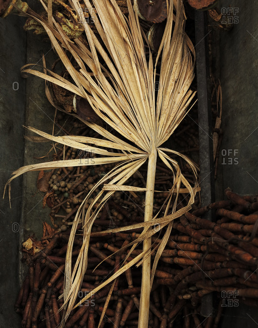 Rustic still life with dry palm leaf
