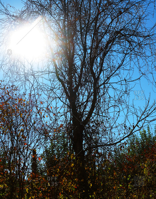 Bare tree in sunlight