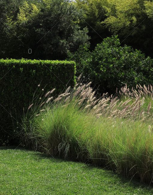 Verdurous hedgerow and lawn