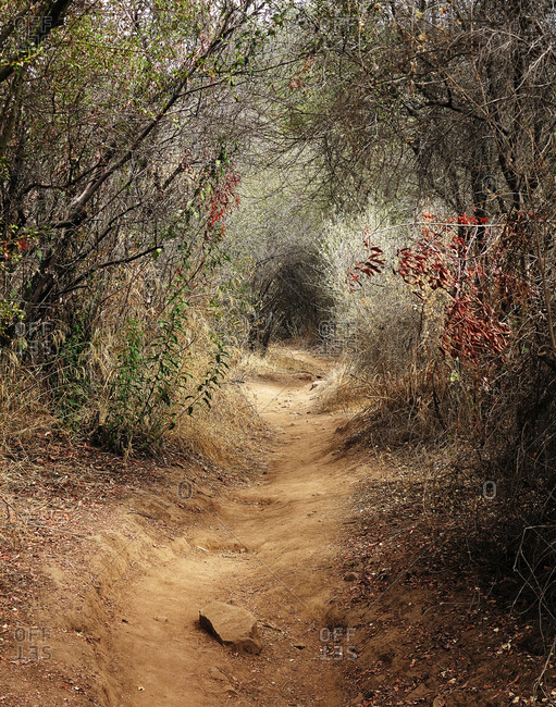 A beaten path in a forest