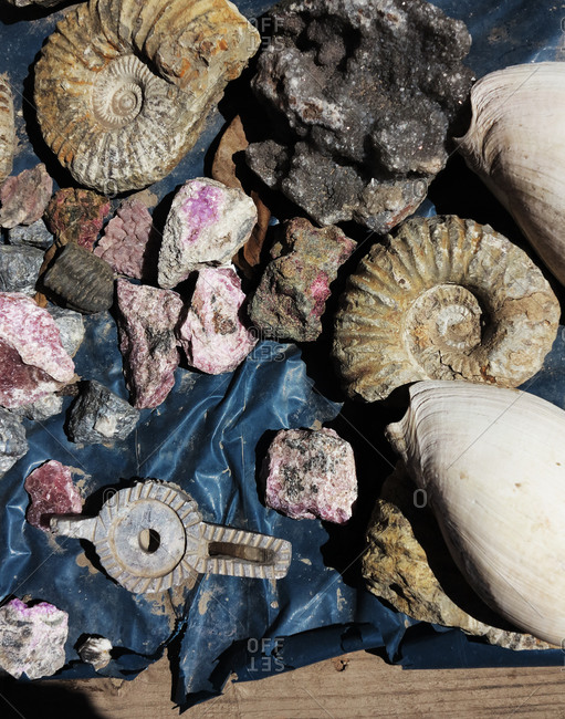 Fossils, shells and mineral stones