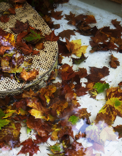 Pile of leaves outside