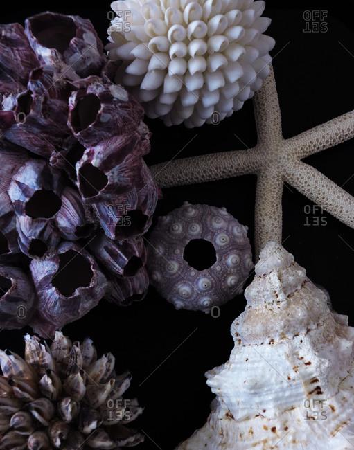Close up of varied shells