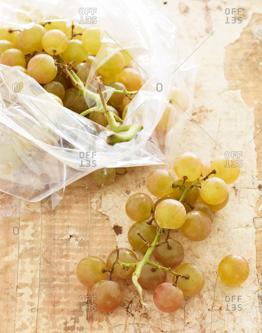 Freshly picked grapes from the vine