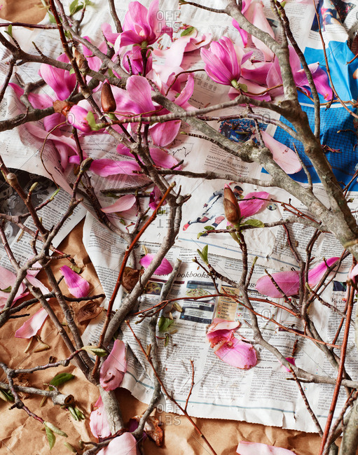 Branches of flowers on newspaper