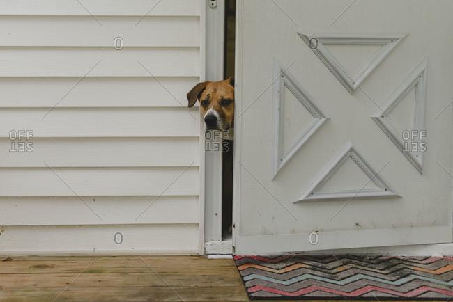A dog peeking out the door