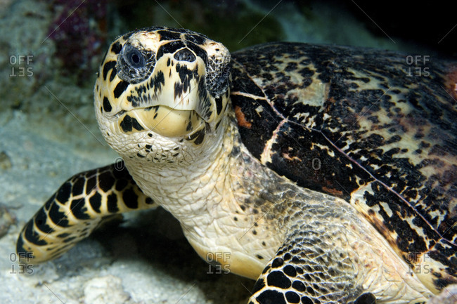 Close-Up Of Sea Turtle