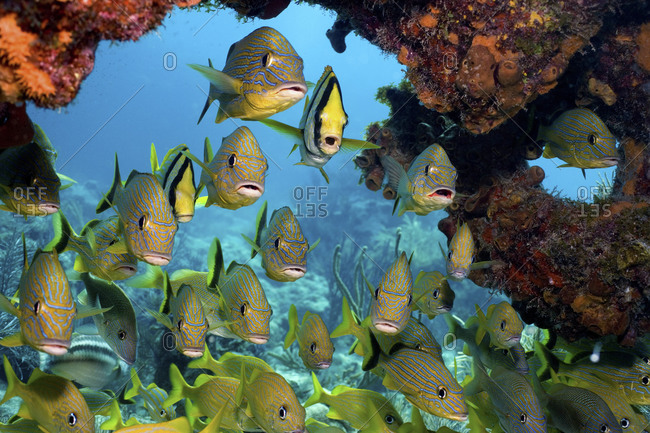 A Variety Of Fish School Together To Ward Off Larger Predators