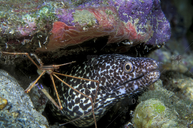 Cleaning Station For Moray Eel