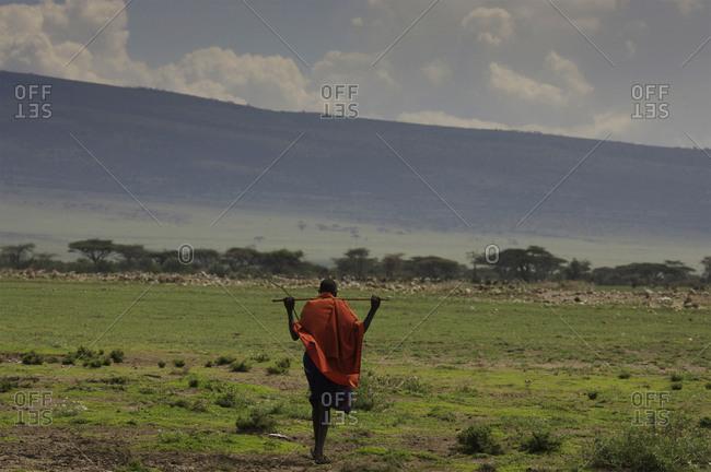 A Maasai tribesman walking in the savannah.
