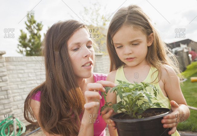 Caucasian mother and daughter gardening together