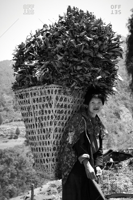 Old woman with a huge basket of leaves