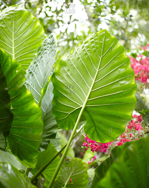 Low angle view of green leaves and tropical flowers