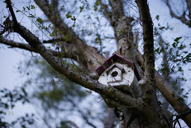 Nest box on a tree