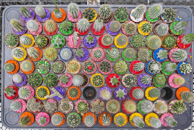 Real cacti collection with different kinds of cactuses