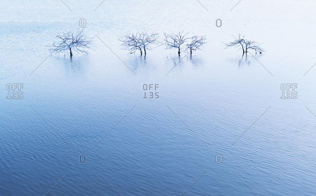 Bare trees in lake