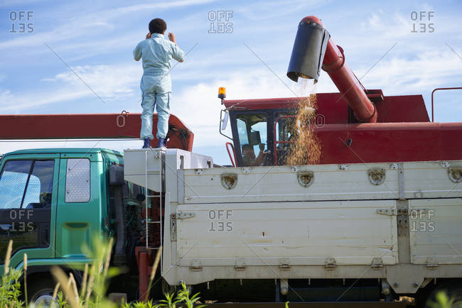Combine harvester is gathering wheat, Biei, Hokkaido, Japan.