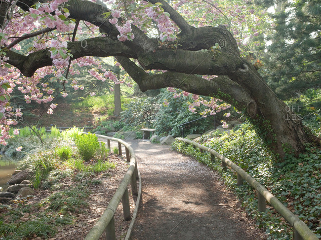 Pink blossom tree in public park.