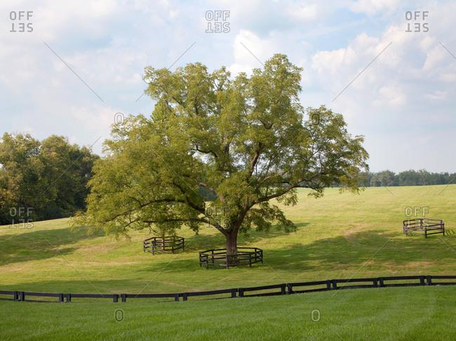 Freestanding tree behind fence.