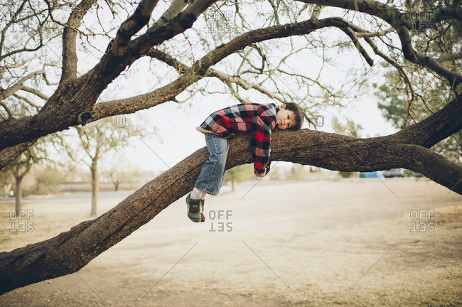 Young boy laying on a thick tree bough