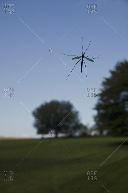An insect on a window