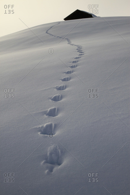 Footprints leading up to cabin