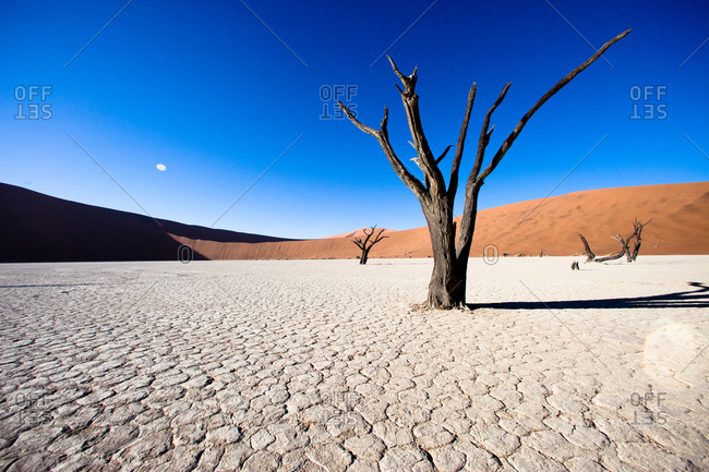 Dry trees with parched ground at Dead Vlei, Namibia