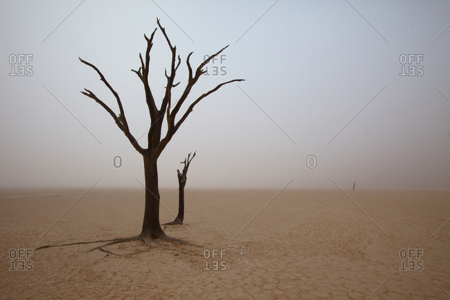 Lonely dry tree at Dead Vlei, Namibia