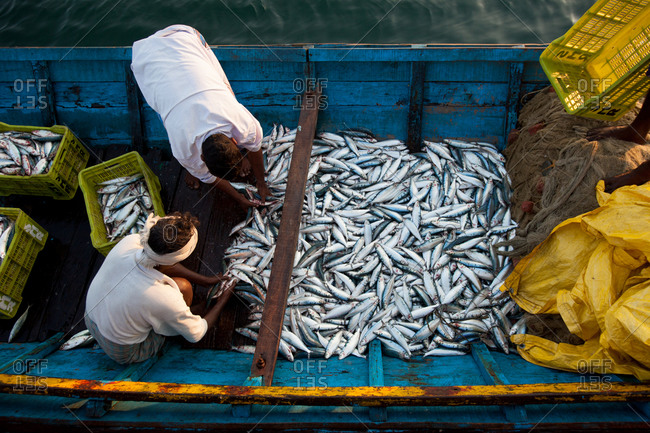 Fishermen bring in daily catch in Andaman Islands, India