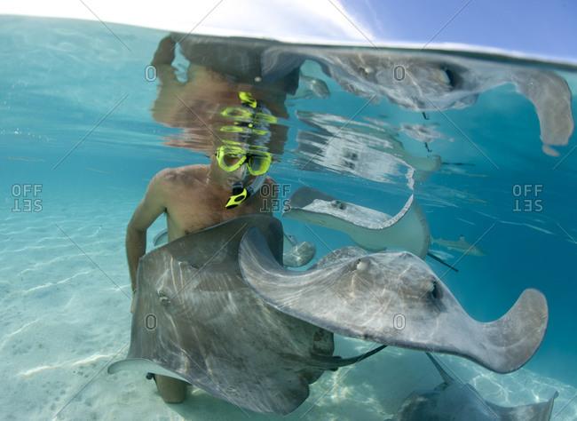 A snorkler and a stingray