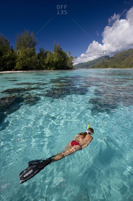 Snorkeler Floats in Lagoon - Offset