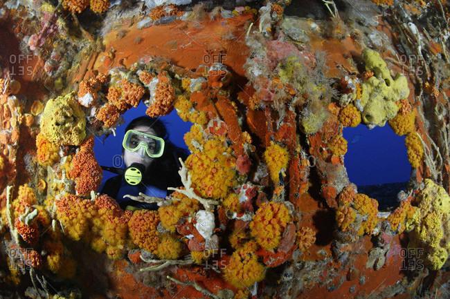 Scuba diver looks into a invertebrate covered shipwreck