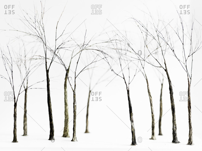 Bare trees in winter,  Sweden