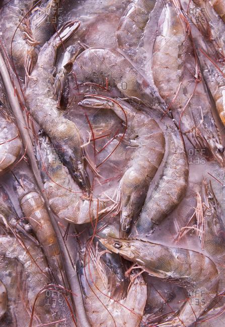 Frozen shrimp on a tray