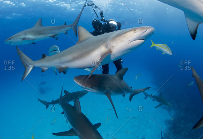 An underwater photographer capturing pictures of circling sharks