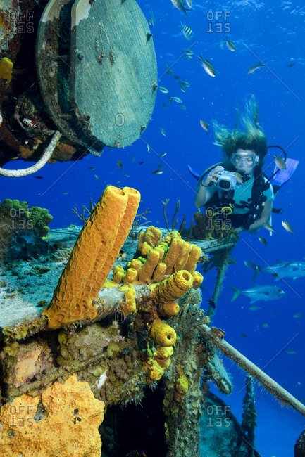 Underwater photographer takes pictures of Yellow tube sponges residing on shipwreck
