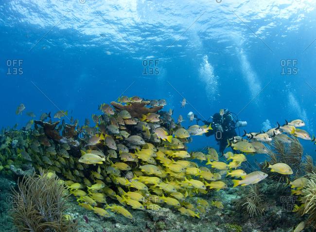 Underwater photographer and schooling fish