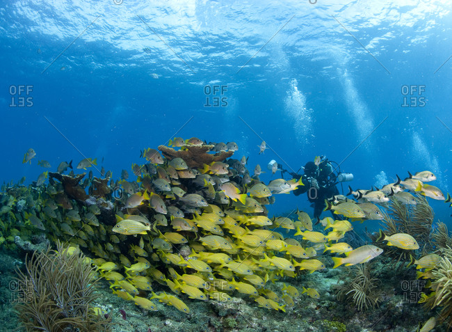 Underwater photographer and schooling fish