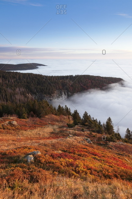 Early morning fog at sunrise in autumn, Feldberg mountain, Black Forest, Baden Wurttemberg, Germany, Europe