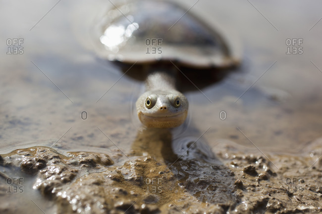 Long-necked turtle smiling at camera