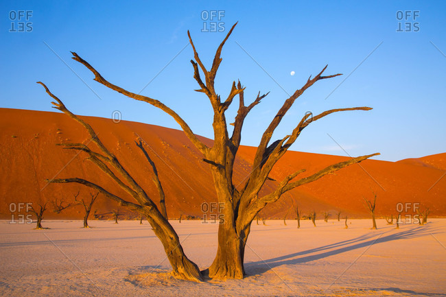 Warm evening sunlight bathes the trees and clay pan of Deadvlei