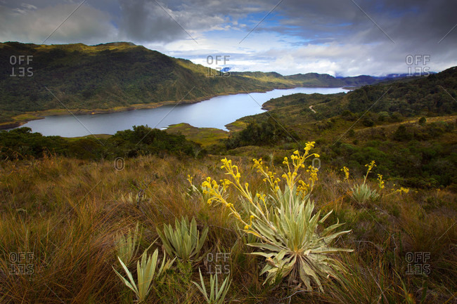 Chingaza National Park is located in the Eastern Cordillera of the Andes, Colombia