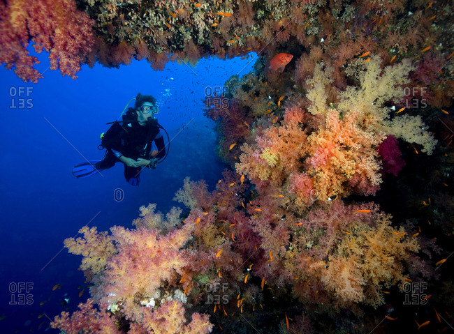 Scuba diver poses amid a plethora of marine life, vibrant soft corals (Dendronepthya sp) and anthias (the small golden fish seen in large schools)