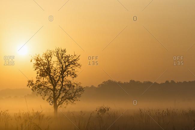 View of Mystic morning at Jim Corbett National Park
