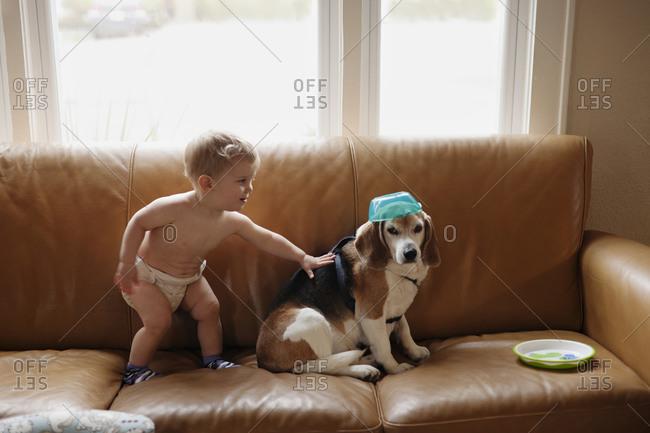 Boy playing with dog on sofa