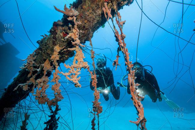 Divers admire the pastel colors of encrusting sponges of shipwreck