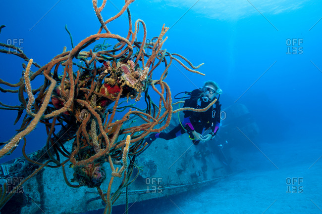 Diver inspects sponges growing on the Keith Tibbetts shipwreck